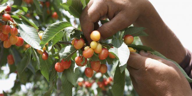 12 conseils pour éloigner les oiseaux du jardin et des arbres fruitiers