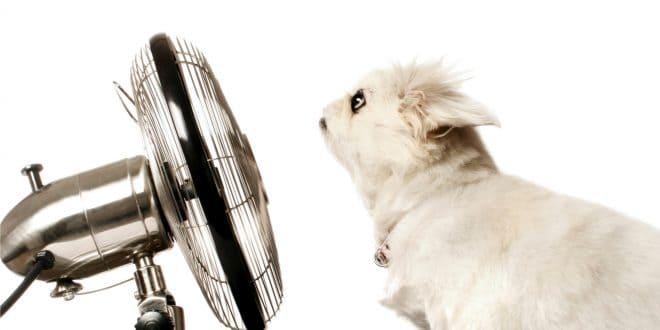 Conseils pour rafraîchir une pièce sans climatisation